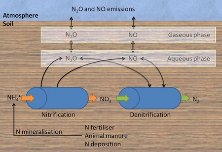 diagram of the soil nitrogen cycle